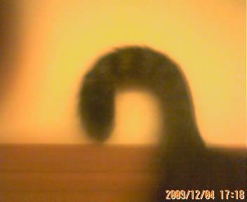 ハルくんの尻尾