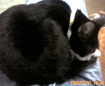 膝の上で眠るこつぶちゃん