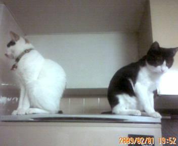 ナンちゃん(左)とこつぶちゃん
