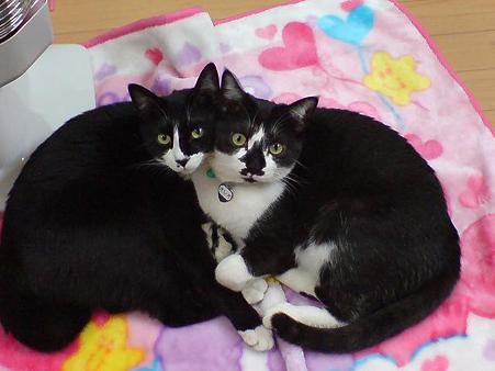 ひじきくん(左)とオレオくん