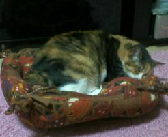 ベッドで熟睡