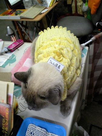 セーターが似合うシャム店長
