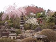 花見山の風景