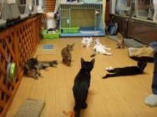 子猫のプチ里親会