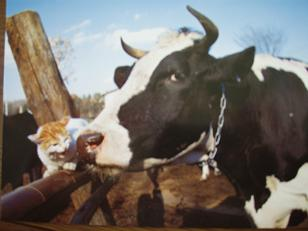 海ちゃんと牛さん
