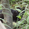 見にくいですが、黒猫ちゃんです