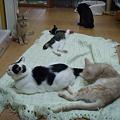 ハウスの猫達