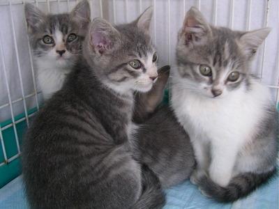 保護された4姉妹のうちの3にゃんず
