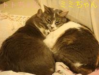 おねむなトトミミちゃん