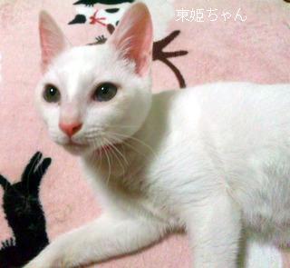 東姫ちゃん