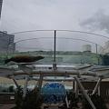 アシカのプール