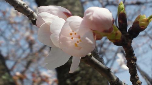 2013-03-23_12-04-56.jpg