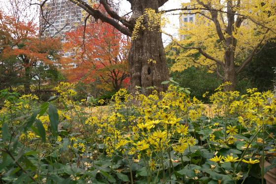 日比谷公園の紅葉1