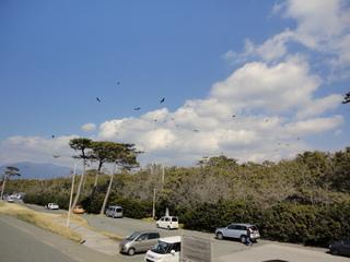 千本浜公園2-001
