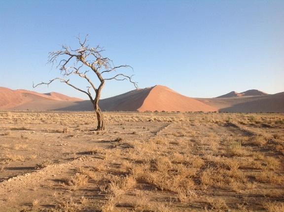 namib desert1