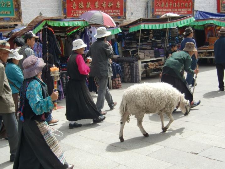 バルコルを巡礼する羊