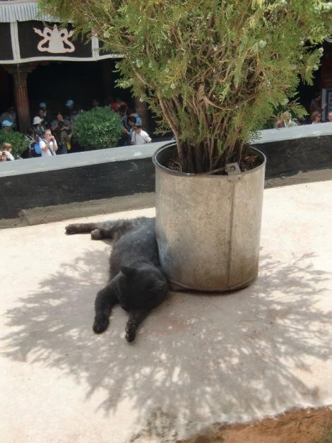 ジョカン寺で涼む黒猫