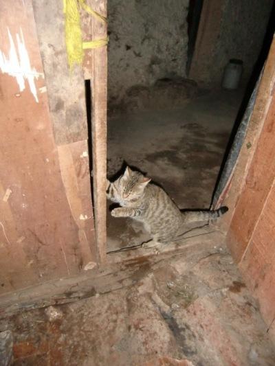 ナムツォのラマ猫?
