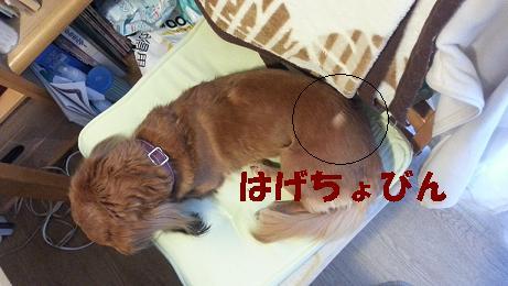 ちるちる6