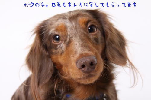 チョロ毛_convert_20110128130711