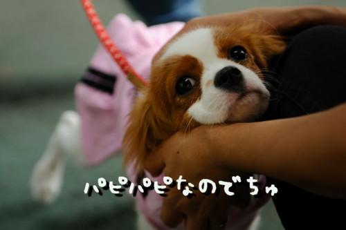 DSC_0892-キャバリ男サス家ブログ用8