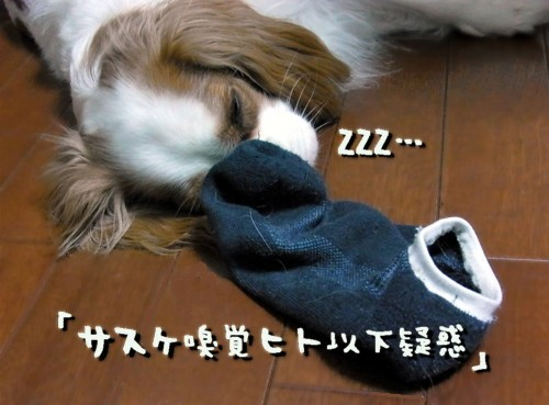R1036468_1.jpg