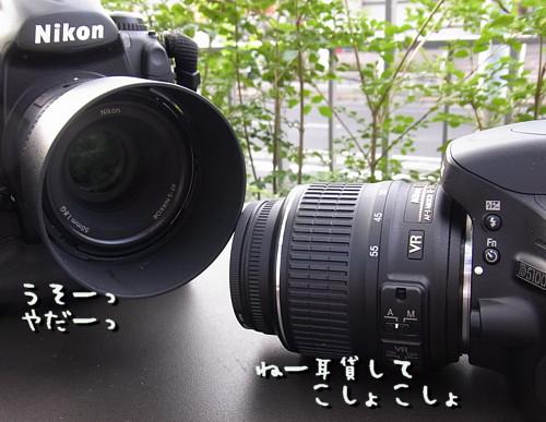 R1036482.jpg