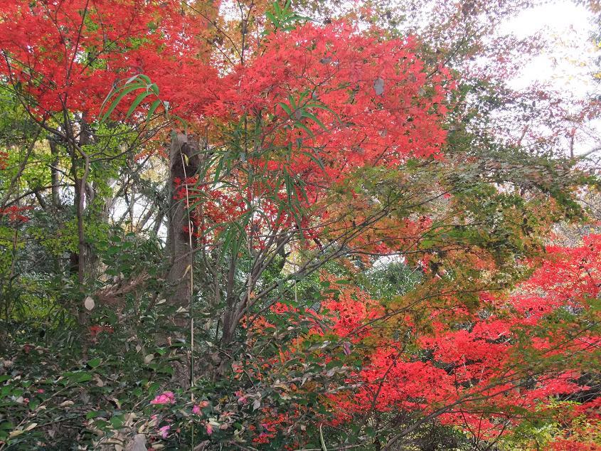 等々力渓谷「紅葉」 1