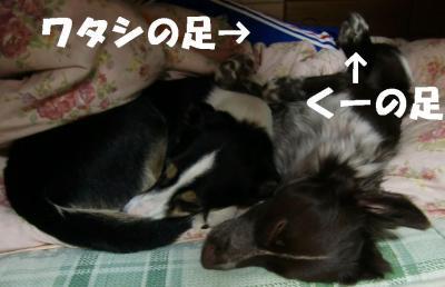 CIMG0004_20110303151833.jpg