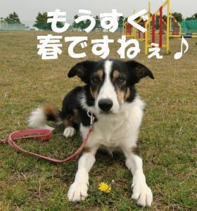 CIMG0004_20110307154955.jpg