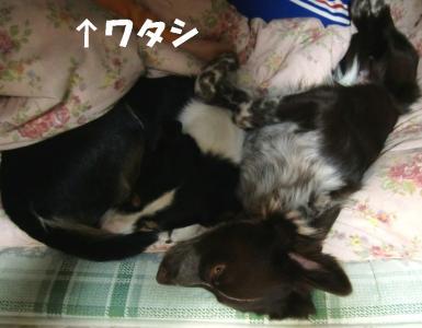 CIMG0005_20110303151446.jpg