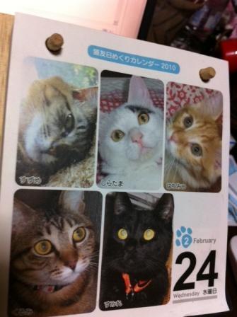 20130313猫カレンダーS02