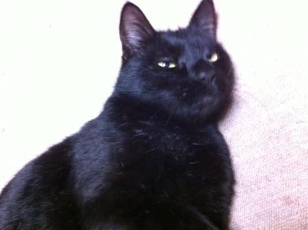 20130407黒猫苦手S05