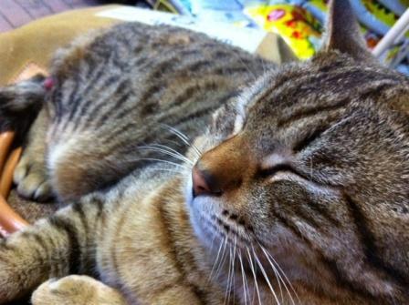 20130405タイヨー猫①S04