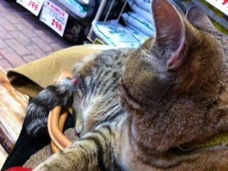 20130405タイヨー猫①S03