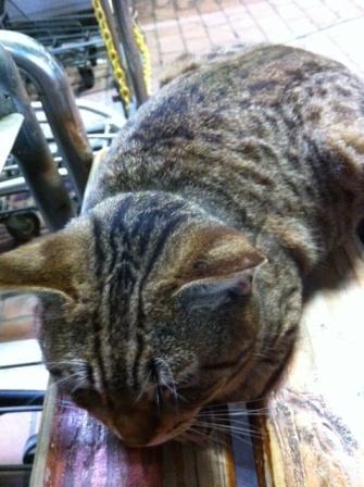 20130405タイヨー猫①S02