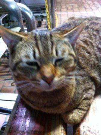 20130405タイヨー猫①S01
