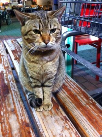 20130405タイヨー猫①S06
