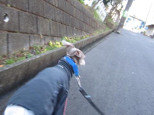 1214お散歩_02