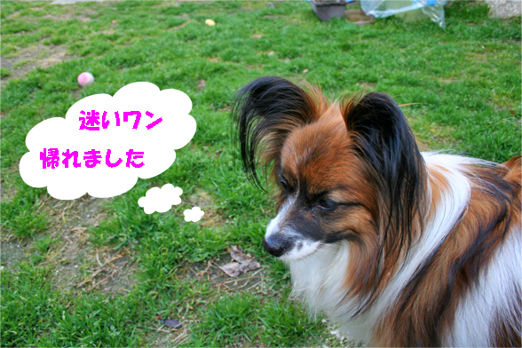 yuzu100224-1.jpg
