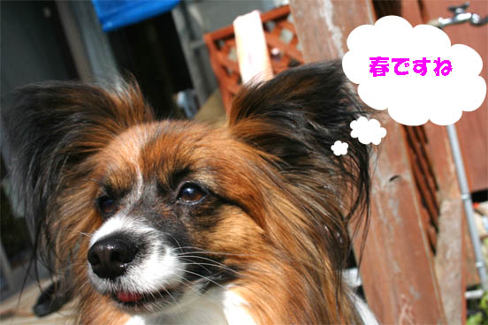 yuzu100308-1.jpg