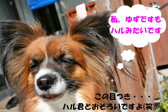 yuzu100308-2.jpg