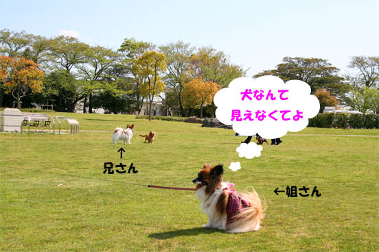 yuzukota100424-1.jpg