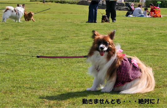 yuzukota100424-2.jpg