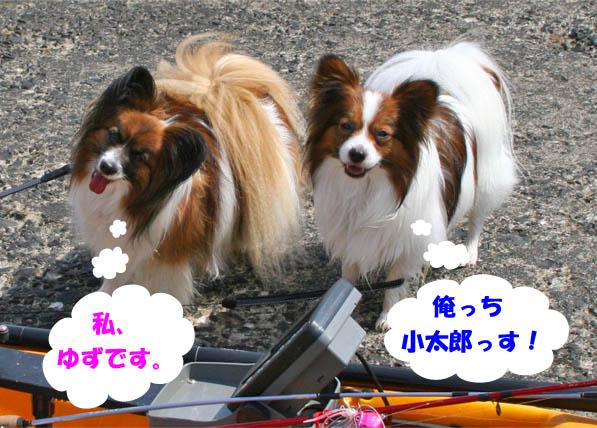 yuzukota100522-1.jpg