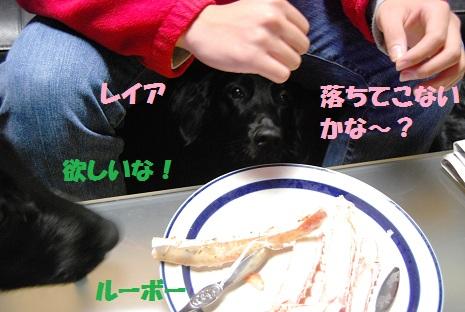 2011kanihosii.jpg