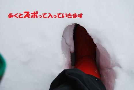2012-1-9-zubo.jpg