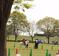 20130414 pony(2)