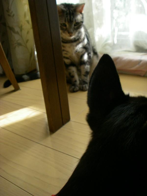 ステキなネコさんでしょ♪