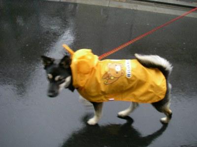 レインコート着てお散歩♪